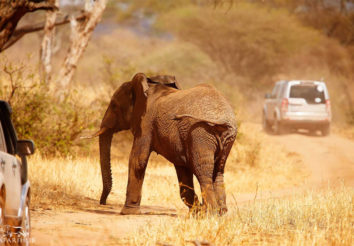 Elephant Expedition – Land Rover Safari