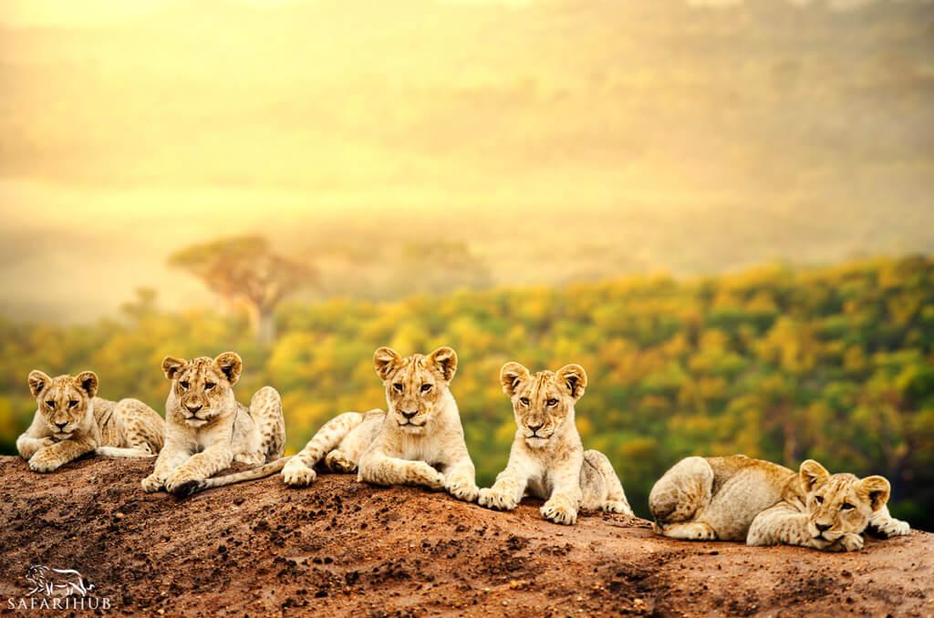 Serengeti to Karatu
