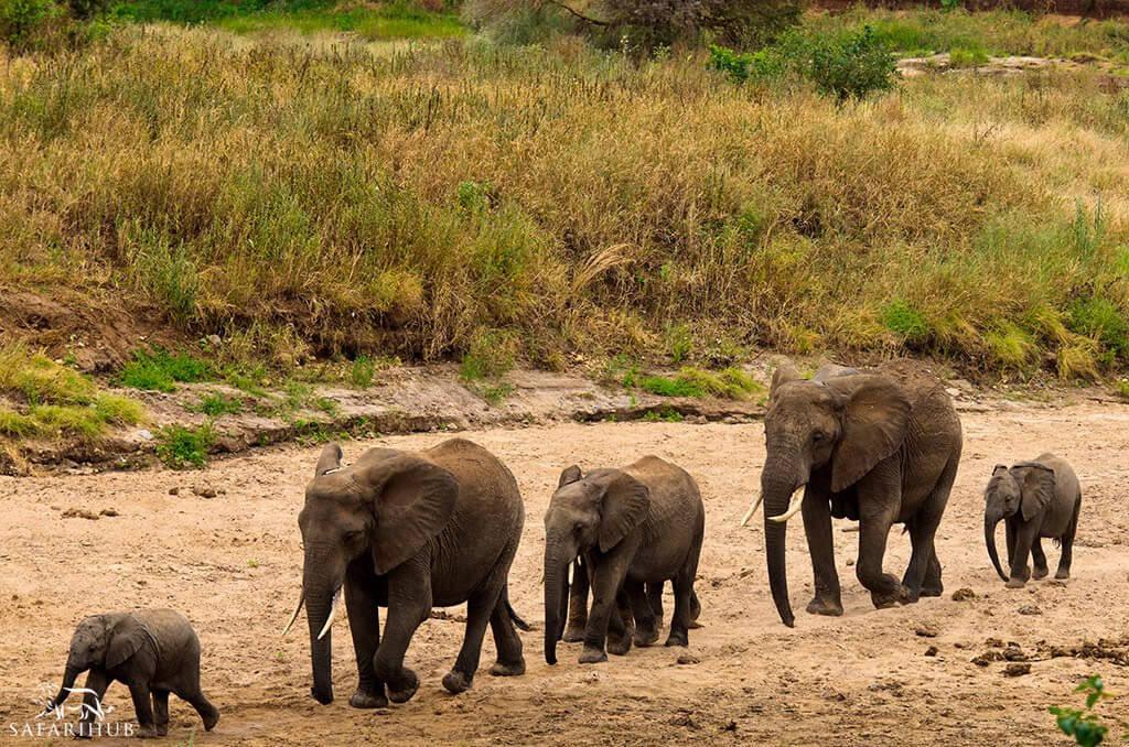 Ngorongoro to Tarangire National Park