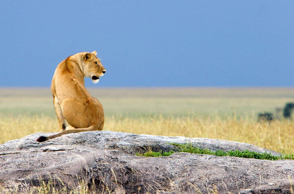 Serengeti to Ngorongoro