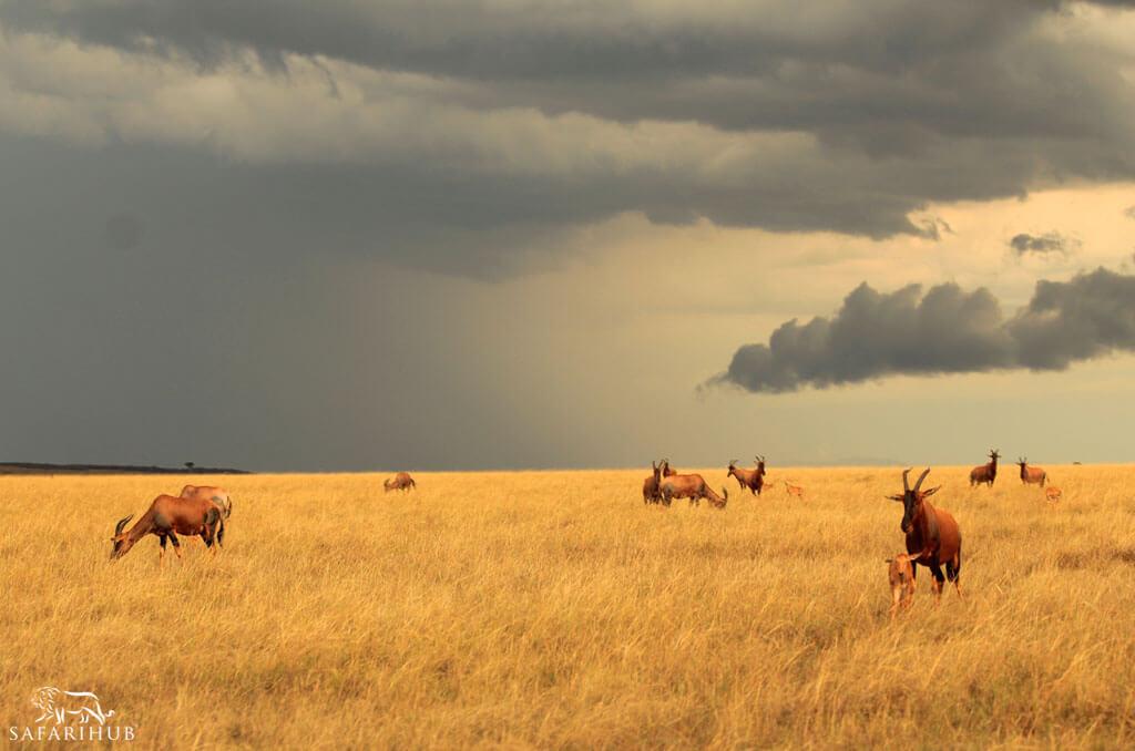 Maasai Mara to Nairobi