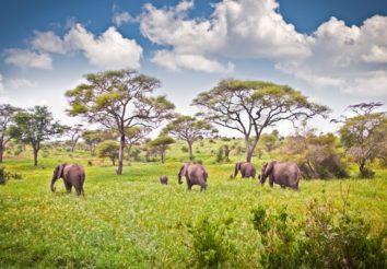 Quintessential Tanzania