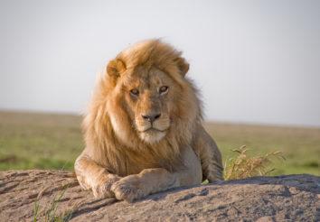 Tanzania Spectacular Safari