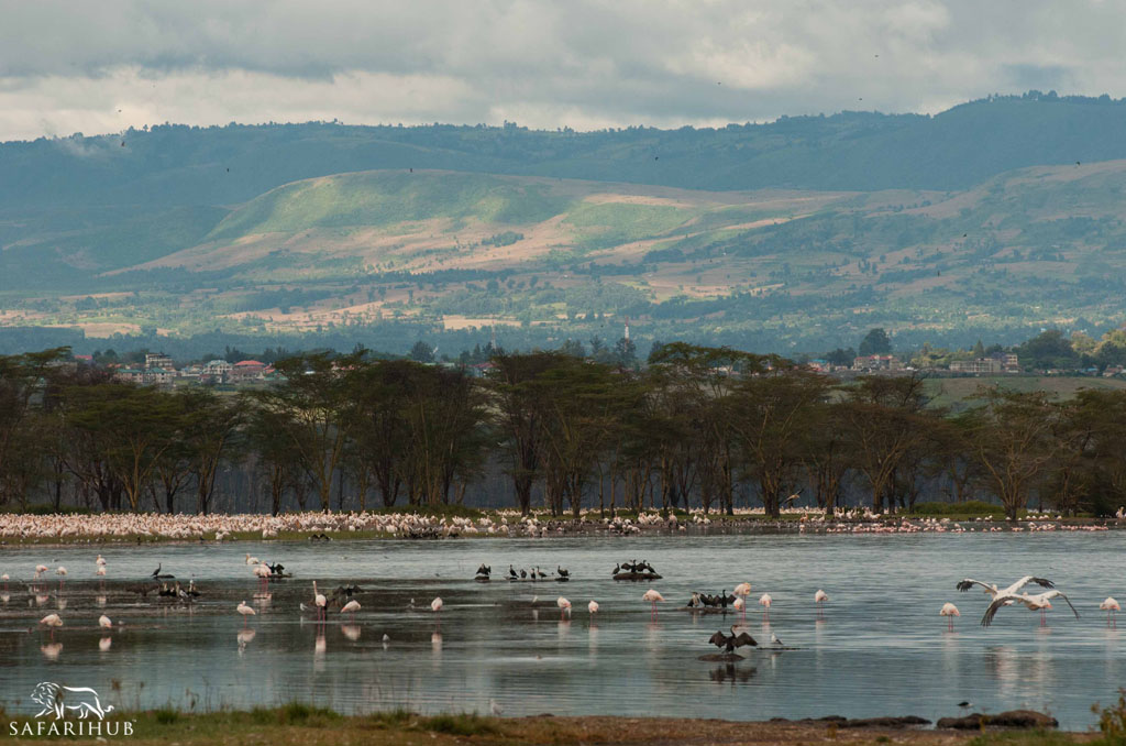 Sweetwaters to Lake Elmenteita