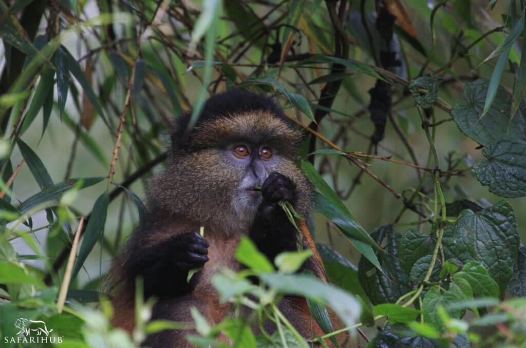 Primates Trekking