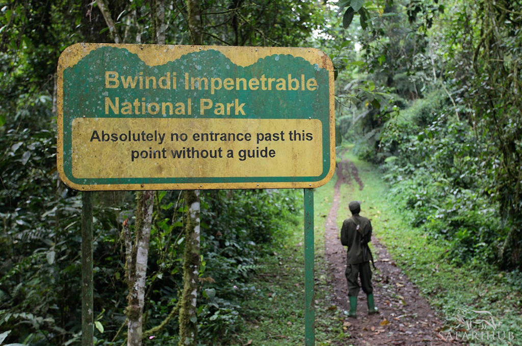 Entebbe to Bwindi Impenetrable National Park