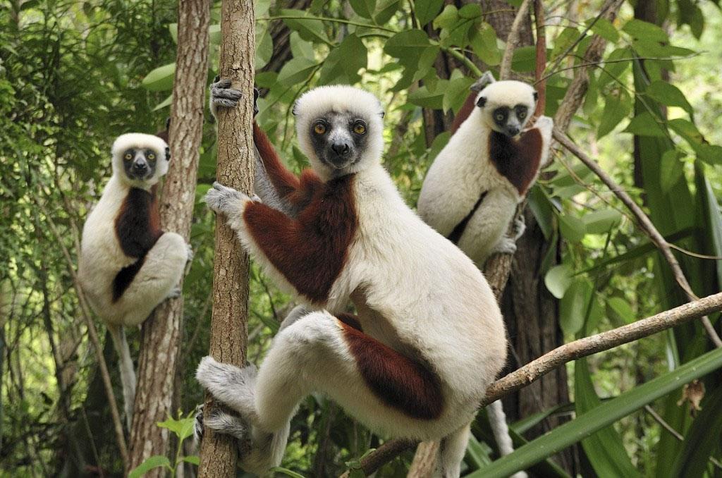 Andasibe Mantadia National Park