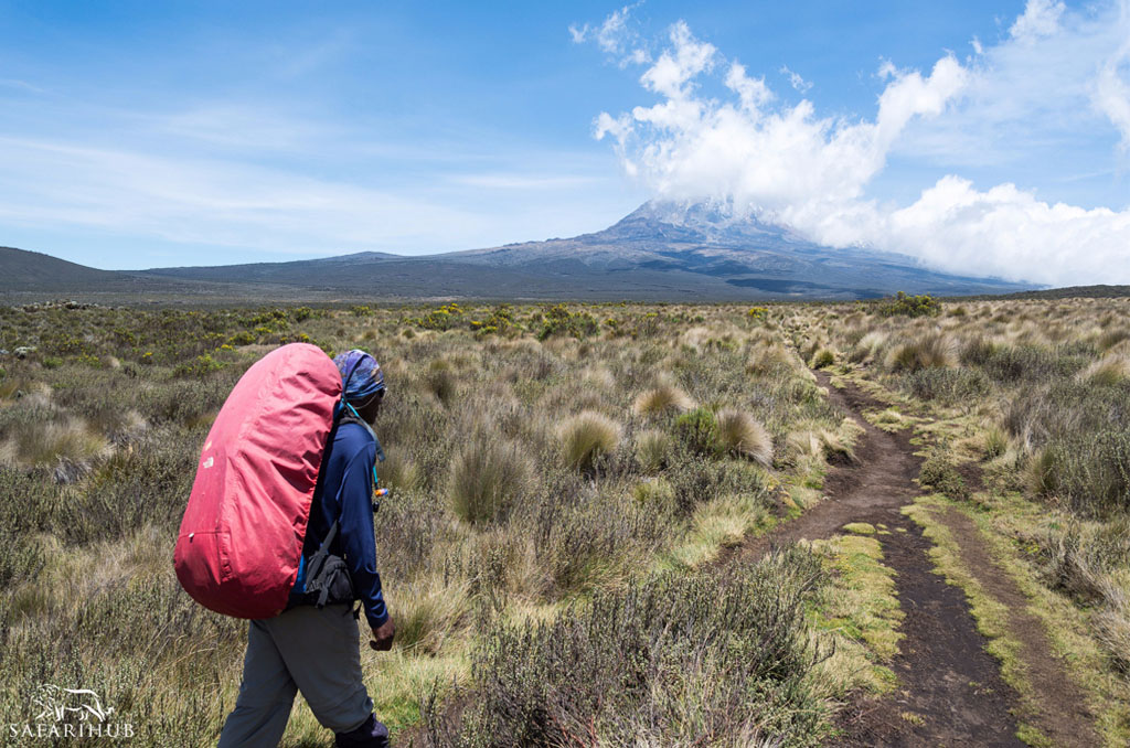 Machame Camp (3,000m/9,800ft) to Shira Camp (3,840m/12,600ft)