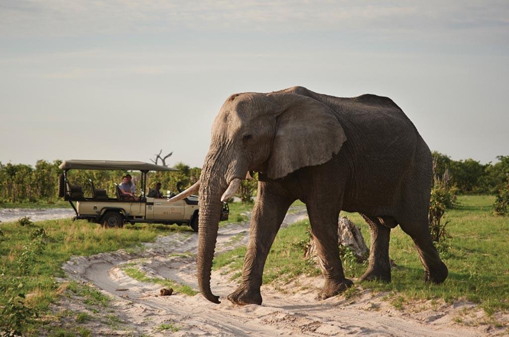 Chobe day trip to Botswana