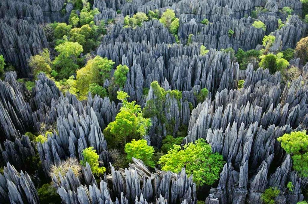 Madagascar Rainforest, Wildlife, Tsingy & Beach - Safarihub