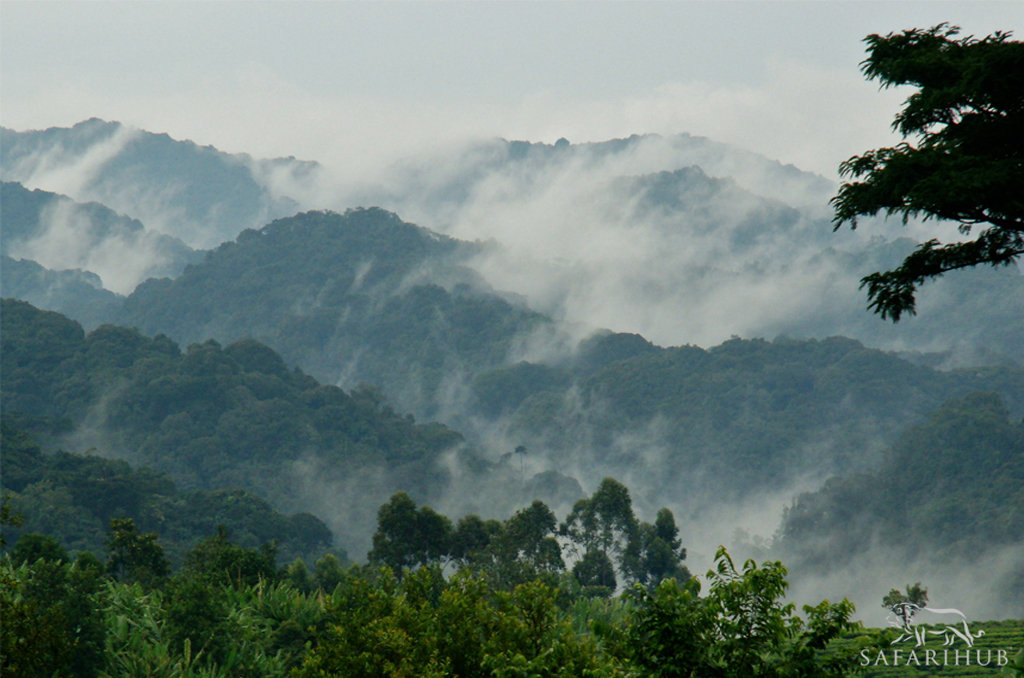 Queen Elizabeth National Park to Bwindi impenetrable Forest