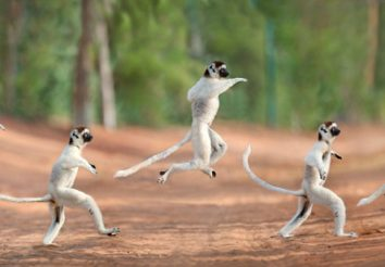 Madagascar Family Holiday