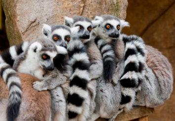 Madagascar Wildlife Discovery
