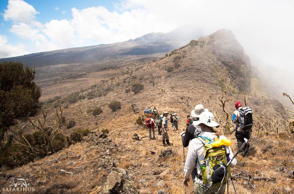 Lemosho Trailhead (2,000m/6,600ft) to Big Tree Camp (2,800m/9,100ft)