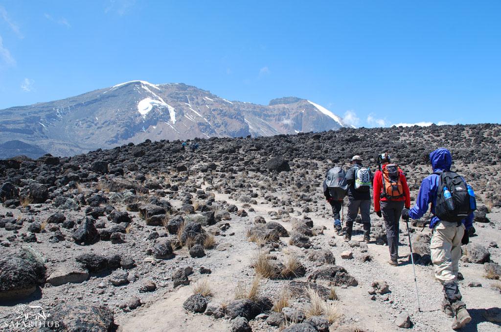 Shira 1 Camp (3,500m/11,500ft) to Shira 2 Camp (3,800m/12,500ft)