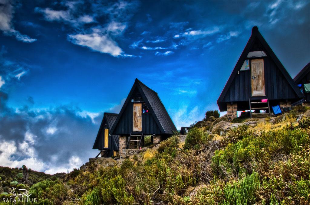 Mandara Huts (2,700m/8,900ft) to Horombo Huts (3,720m/12,200ft)
