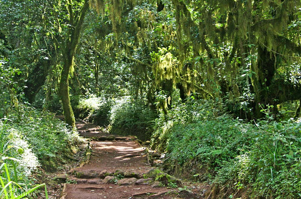 Horombo Huts (3,720m/12,200ft) to Marangu Gate (1,830m/6,000ft)