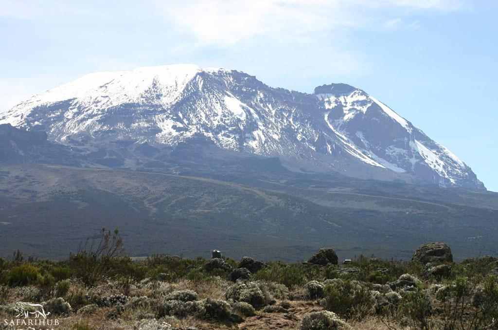 Big Tree Camp (2,800m/9,100ft) to Shira 1 Camp (3,500m/11,500ft)