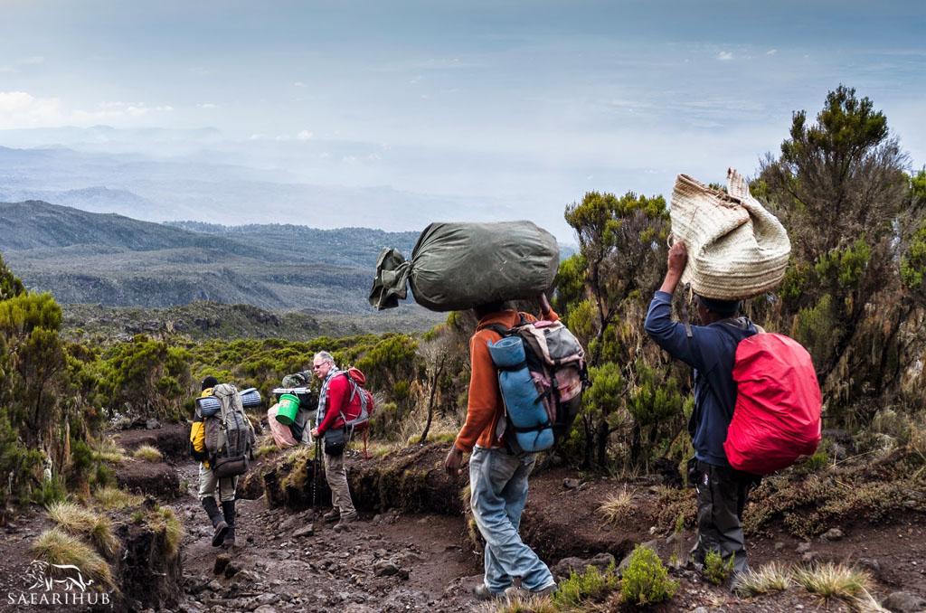 Mweka Camp (3,110m/10,200ft) to Mweka Gate (1,830m/6,000ft) (3,110m/10,200ft)