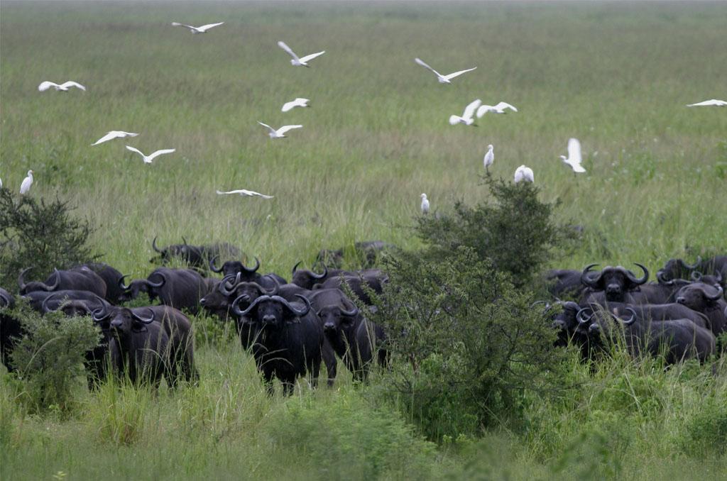 Arusha to Katavi National Park