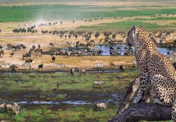 Classic Tanzania Safari & Zanzibar