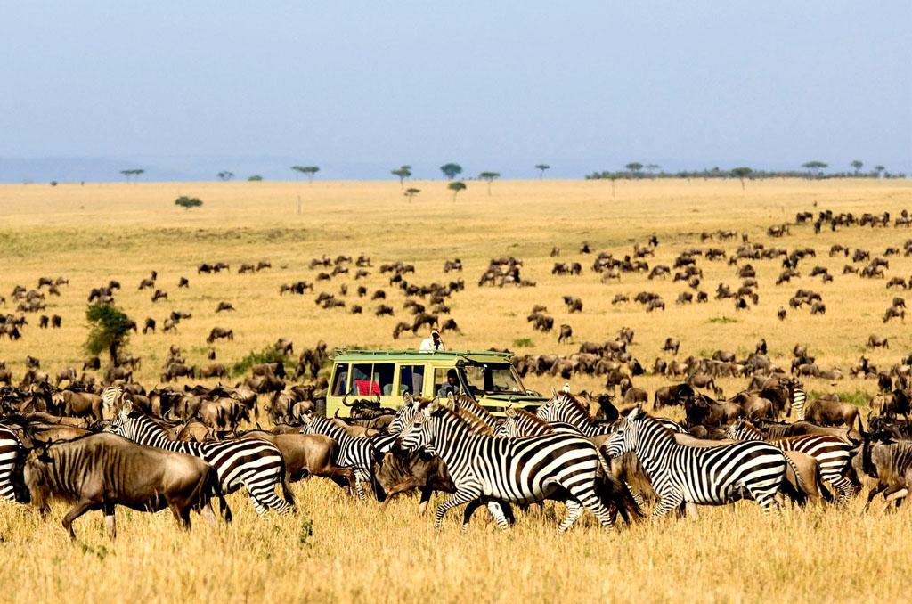 Lake Manyara National Park to Serengeti National Park