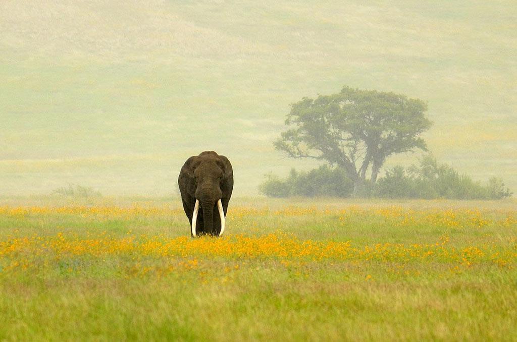 Ngorongoro Crater to Tarangire National Park