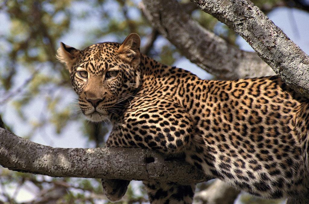Tarangire National Park to Arusha