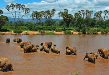 Samburu & Masai Mara Flying Safari