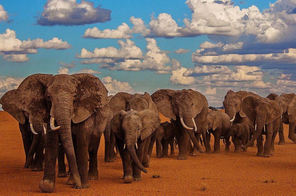Nairobi to Amboseli National Park