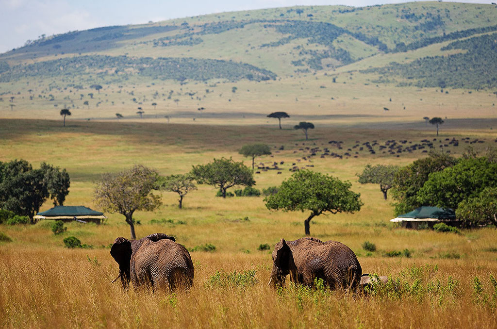 Meru to Masai Mara Game Reserve