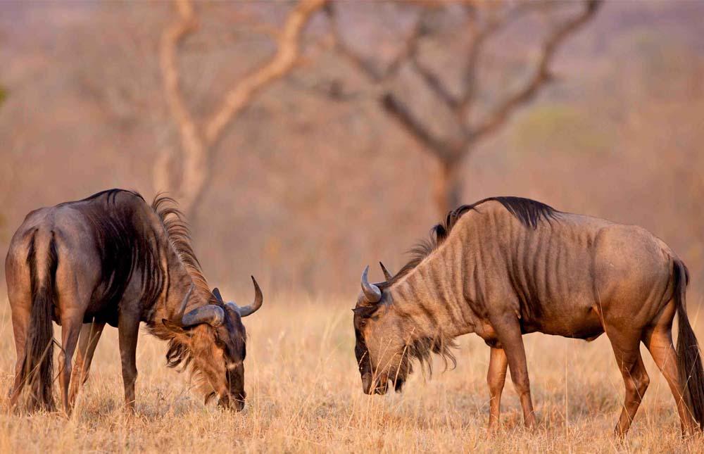 Ngorongoro to the Serengeti