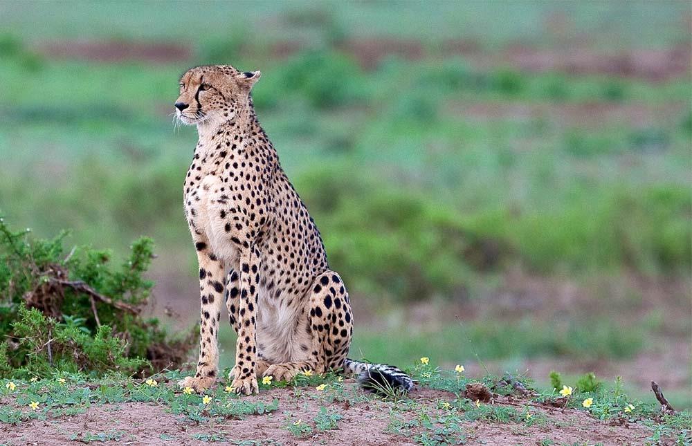 Tarangire National Park And Back To Arusha