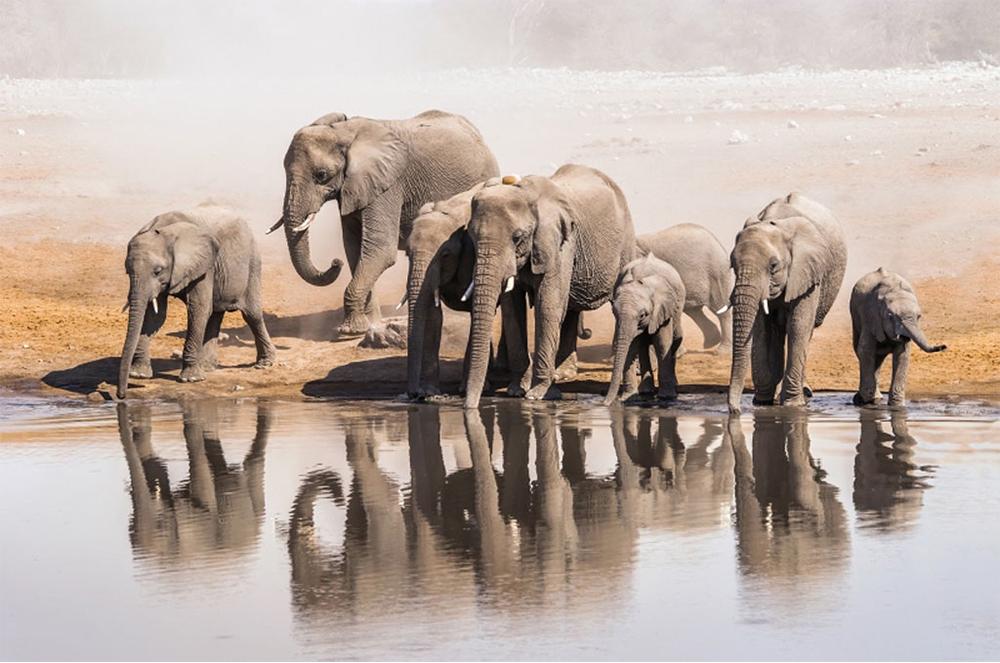 Best Namibia Safari