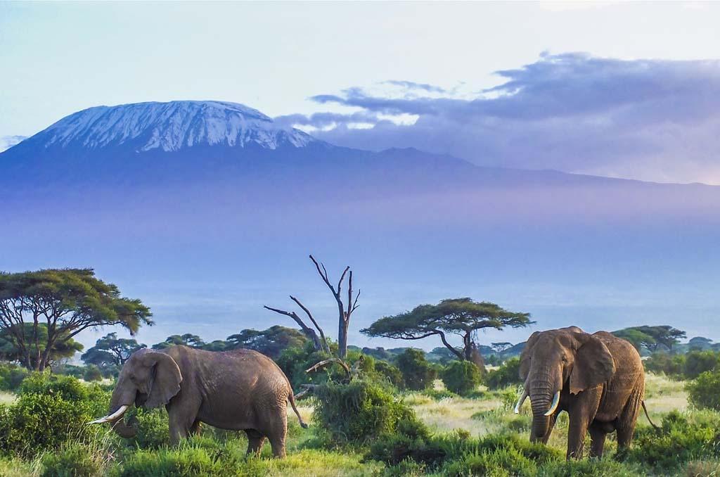 Nairobi to Amboseli