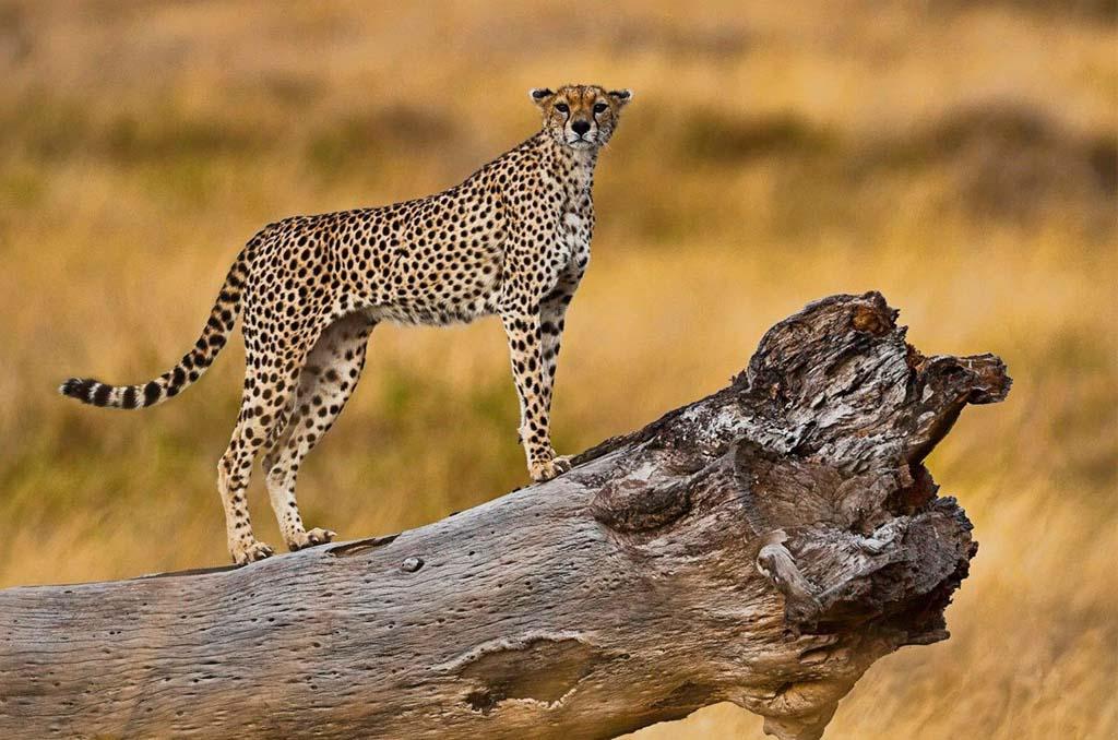 Lake Manyara to Serengeti National Park