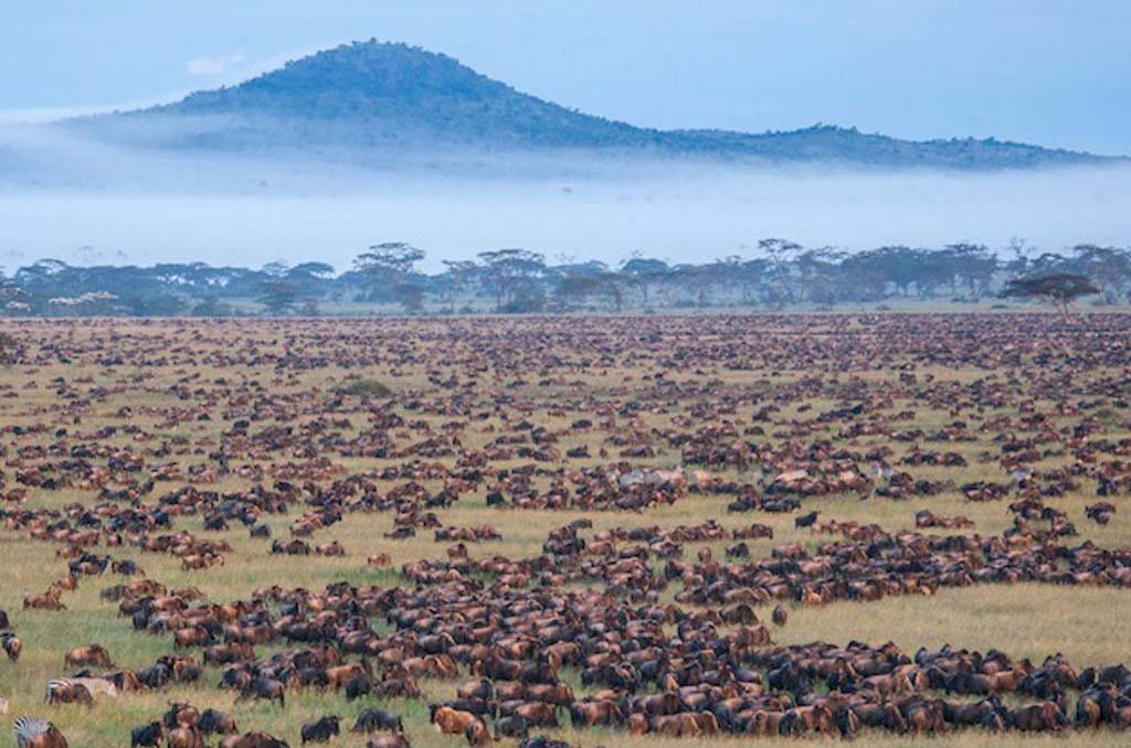 Drive to central Serengeti