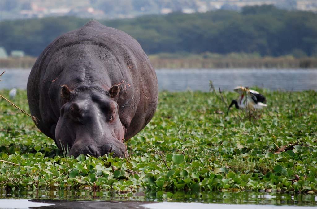 Amboseli to Lake Naivasha
