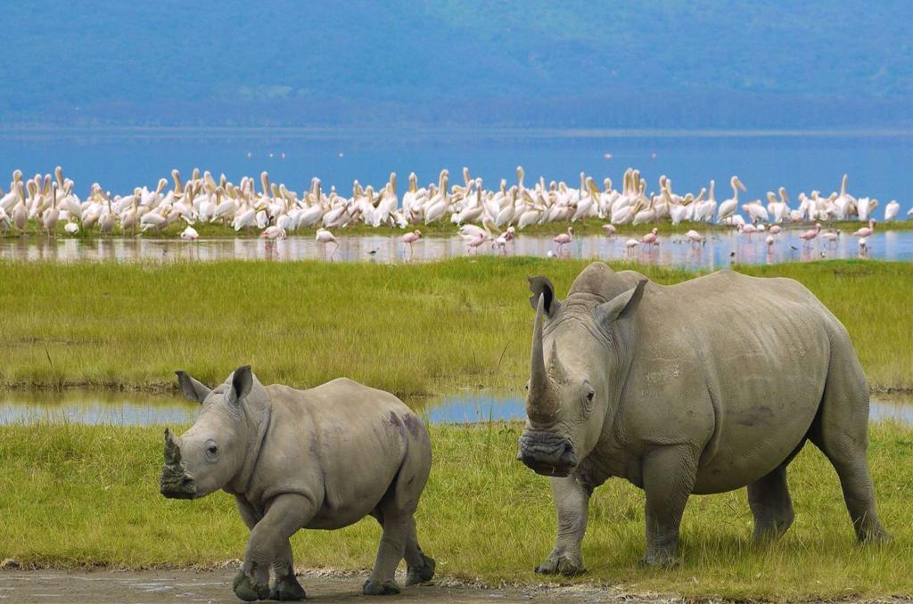 Masai Mara – Lake Nakuru
