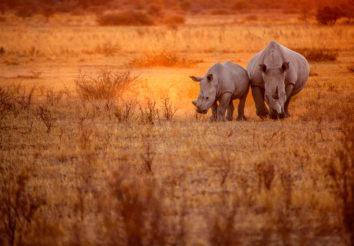 Impressive Tanzania Lodge Safari
