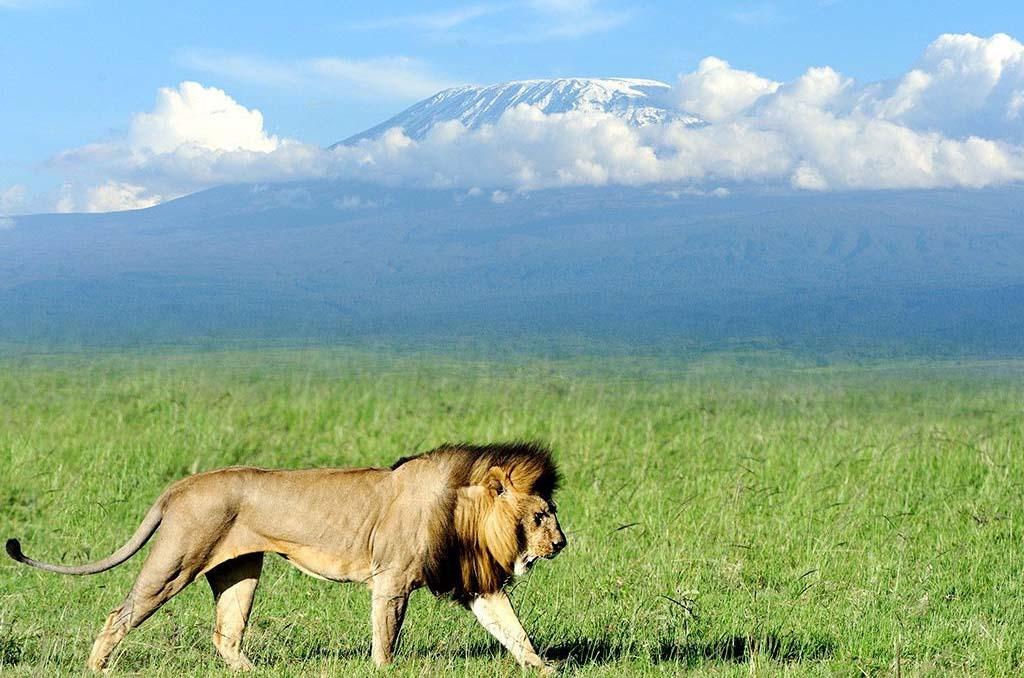 Lake Nakuru - Amboseli National Park