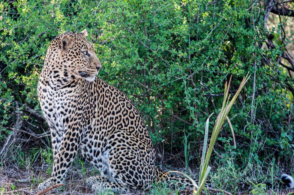Amboseli National Park – Tsavo West National Park