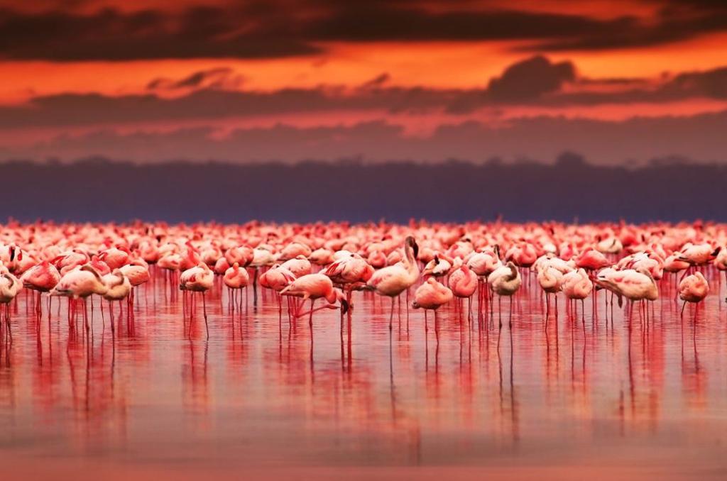 Aberdares - Lake Nakuru