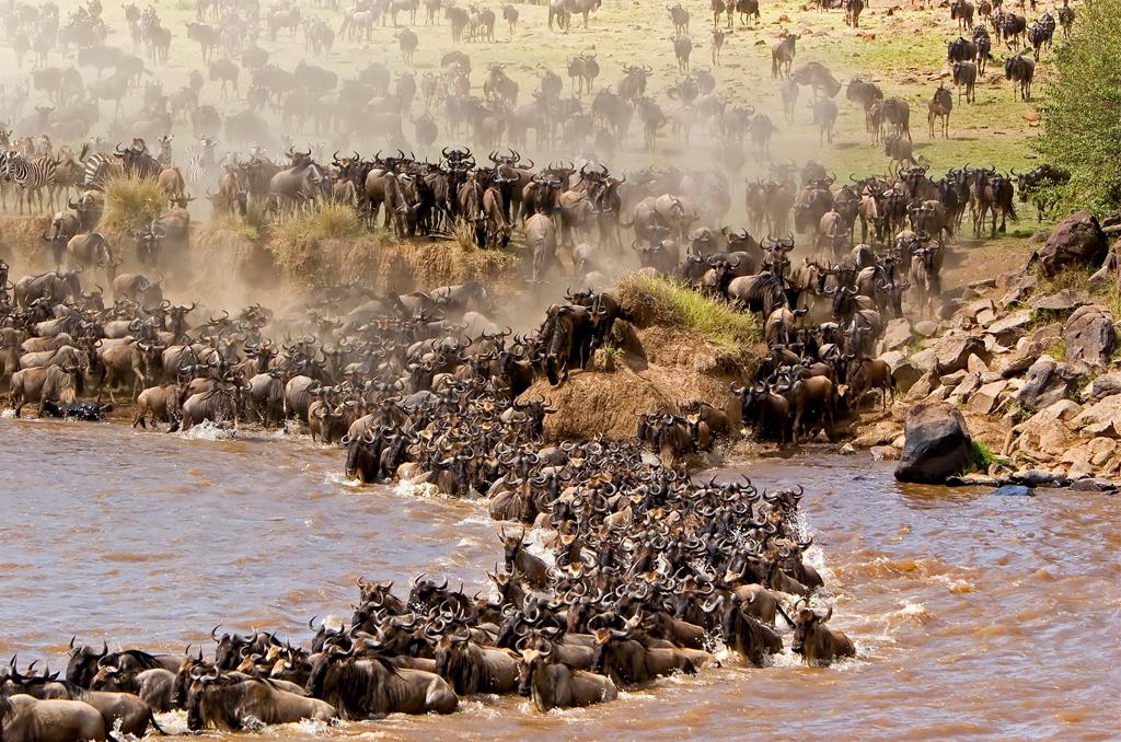 Lake Nakuru - Masai Mara Game Reserve