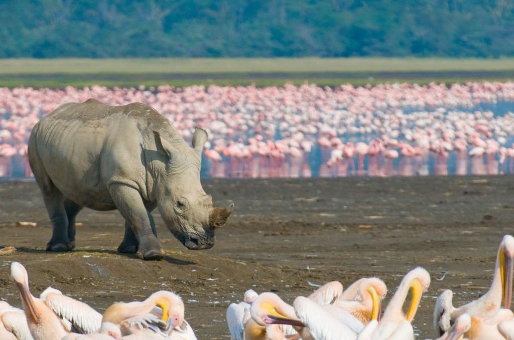 Lake Nakuru to Masai Mara