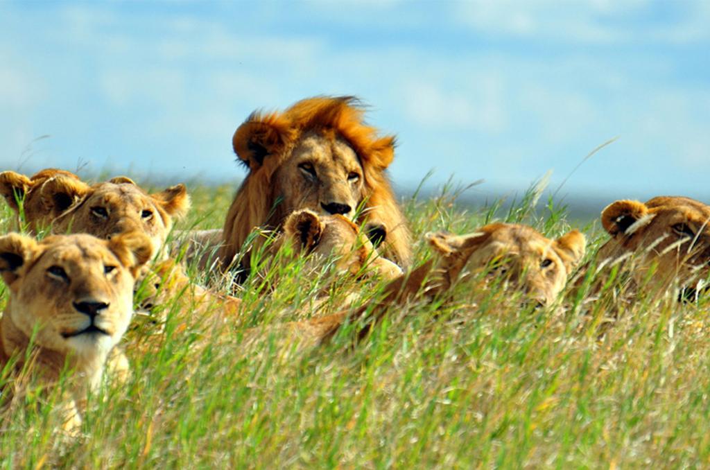 Masai Mara to Nairobi