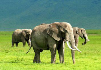 Tanzania Secrets Camping Safari