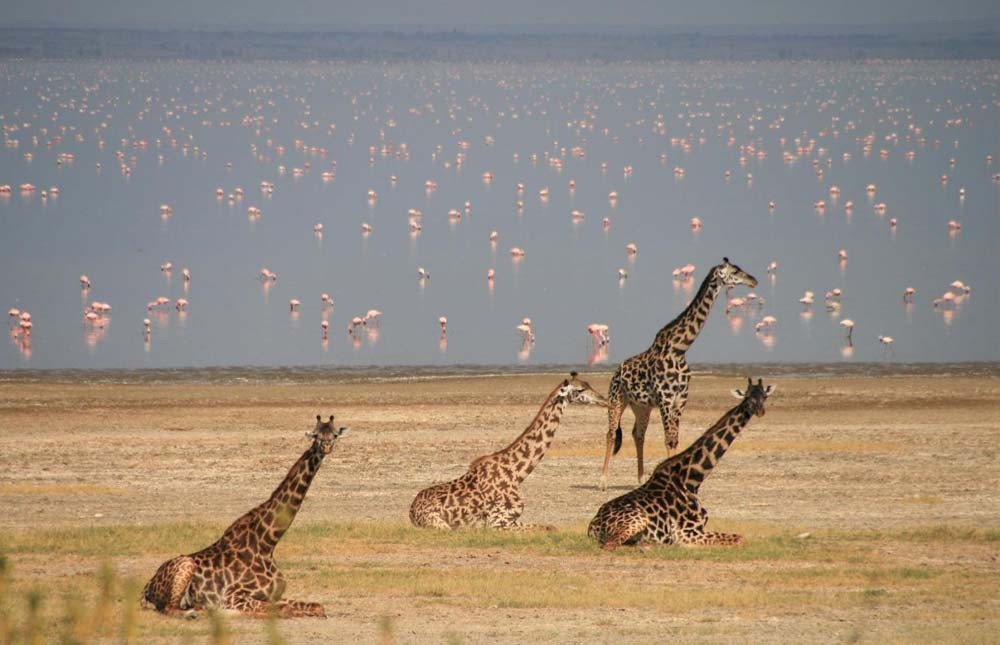 Tarangire Area – Lake Manyara National Park