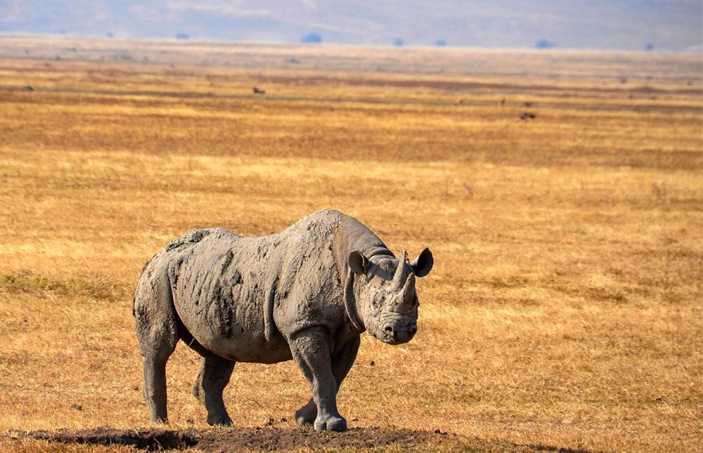 Tarangire Area – Lake Manyara National Park – Ngorongoro Conservation Area