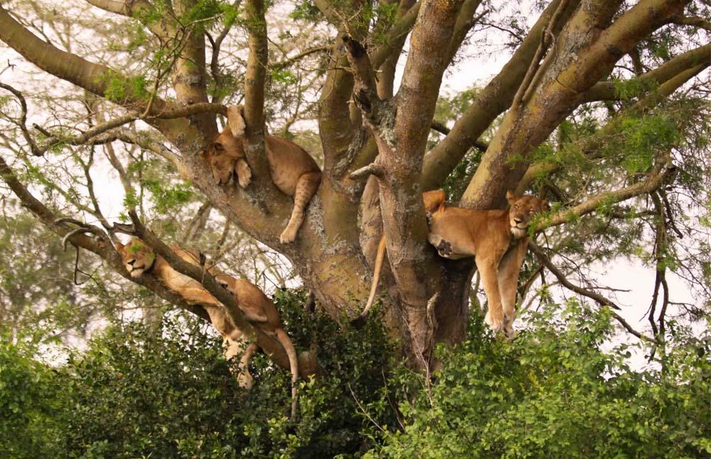 Tarangire Area – Lake Manyara National Park – Karatu